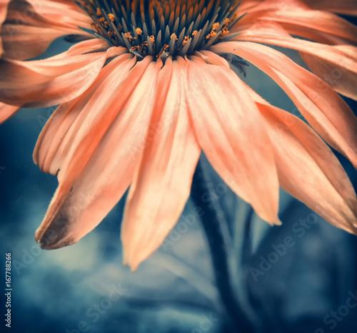 Fotobehang Gerbera Blume