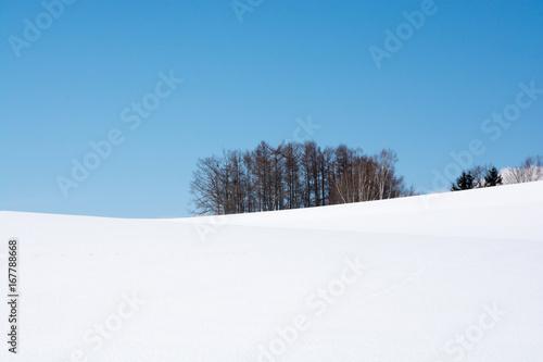 Staande foto Blauw 雪原とカラマツ林と青空