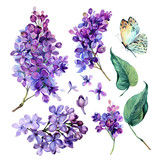 watercolor Collection of Purple Lilac.