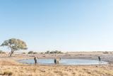 Trzy słonie afrykańskie w waterhole w północnej Namibii