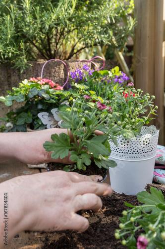 Fridge magnet Blumen pflanzen
