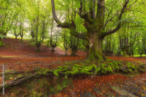 Tree roots in Gorbea Natural Park