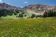 Wild Flower Mountain