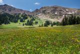 Wild Flower Mountain - 167850442