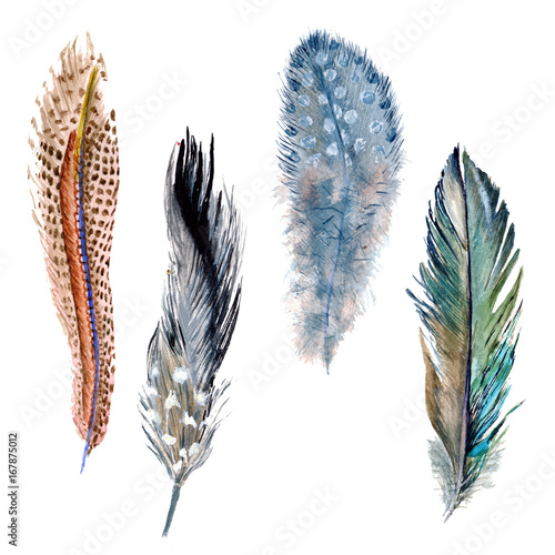 Watercolor bird feather from wing isolated. Aquarelle feather for background, texture, wrapper pattern, frame or border. - 167875012