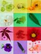 Quadro nature composition