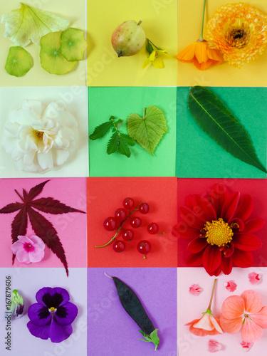 nature composition