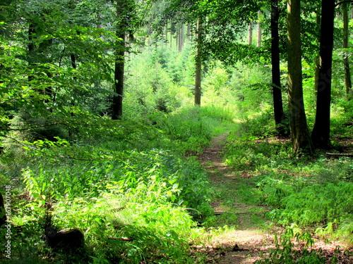 Foto op Canvas Weg in bos Chemin en foret