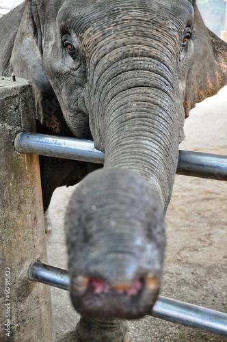 Plakat elephant in a zoo