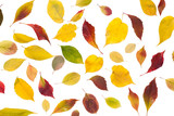 Fall maple leaves pattern isolated on white background