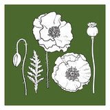 Hand drawn set of side and top view poppy flower, bud, pod, leaf, sketch vector illustration isolated. Realistic hand drawing of poppy, spring, summer decoration element