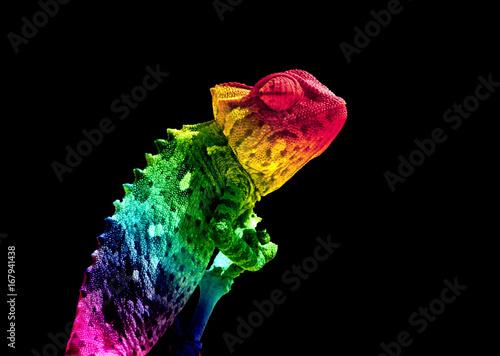 Kolory tęczy Chamaleon