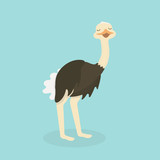 Cute Ostrich in flat style isolated. - 167945034