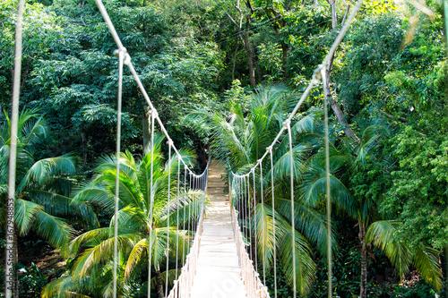 Obraz na płótnie Jungle rope bridge hanging in rainforest of Honduras