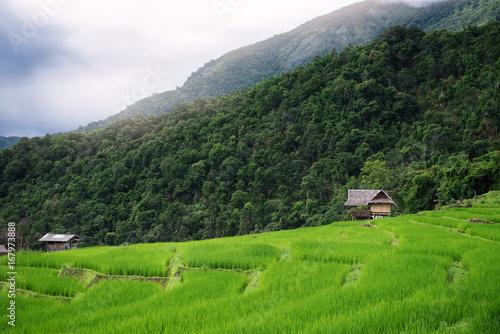Plexiglas Rijstvelden Green terrace rice field with mountain background