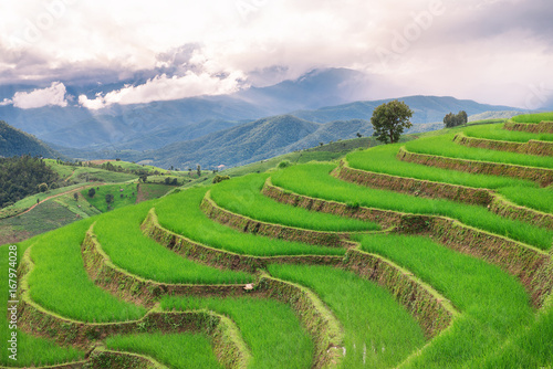 Aluminium Rijstvelden Green terrace rice field with mountain background