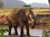 elephant - 167976014