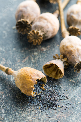 Dried poppy heads and seeds.