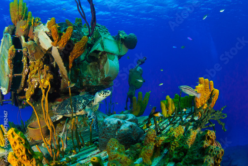 Fotobehang Schipbreuk A hawksbill turtle can be seen swimming around an underwater shipwreck in Little Cayman. The vessel is called the captain Keith Tibbetts and was a Russian destroyer based in Cuba before being sunk
