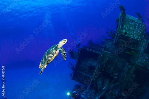 Aluminium Schipbreuk A hawksbill turtle can be seen swimming around an underwater shipwreck in Little Cayman. The vessel is called the captain Keith Tibbetts and was a Russian destroyer based in Cuba before being sunk