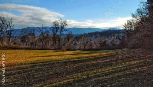 Foto op Canvas Grijze traf. landscape