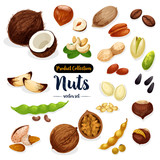 Nuts, seed, bean cartoon icon set for food design - 167997620