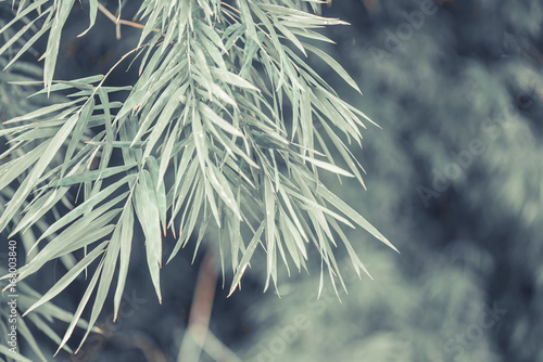 Bamboo leaves background in vintage tone. - 168003840