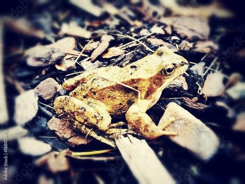 Fotobehang Kikker frog