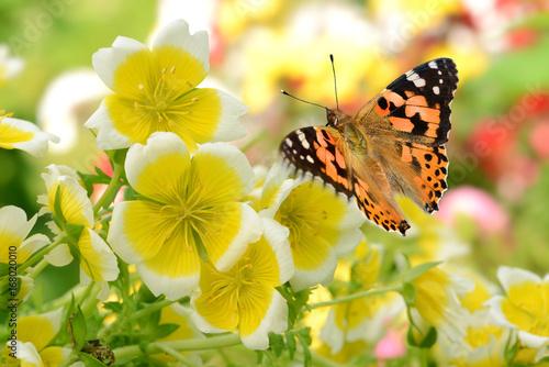 Poster Schmetterling 287