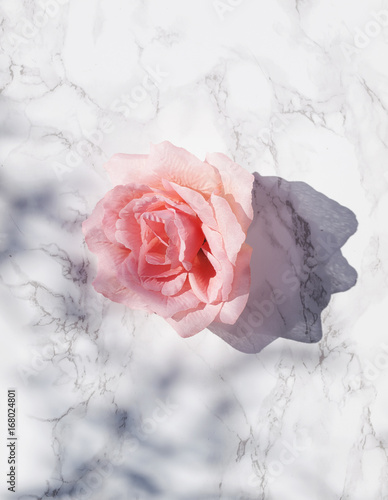 Big pink rose on white marble background with  shadows in direct sunlight. Flat lay. Top view. Copy space