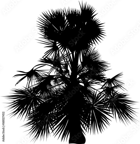 single small black palm tree on white