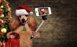 Dog in red Christmas hat taking a selfie together with a smartphone.