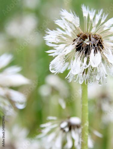 Staande foto Lelietje van dalen Blüten im sonnelicht