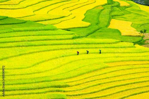 Foto op Aluminium Geel Ruong Bac Thang - Yen Bai