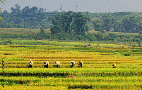Foto op Aluminium Oranje Ruong Bac Thang - Yen Bai