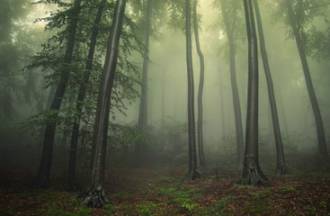 misty woods, landscape with trees