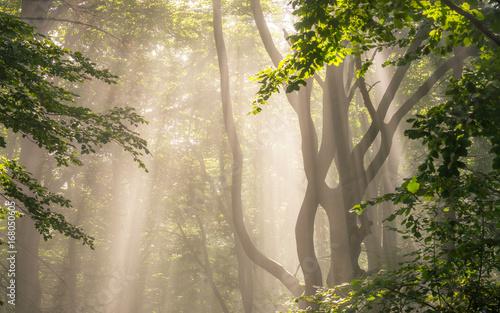 Ranku słońca promienie w lesie
