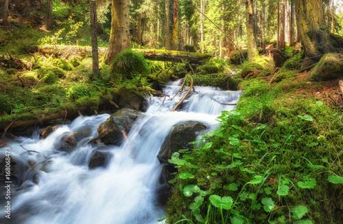Papiers peints Rivière de la forêt Река в лесу
