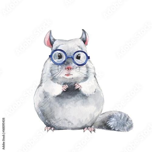 Chinchilla in glasses, cute watercoloe illustration - 168095438