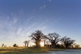 Wschód słońca w Baines Baobab