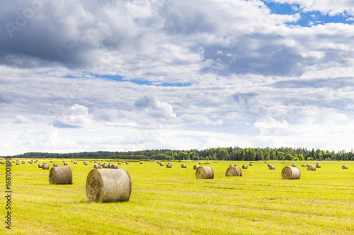 Poster Field full of hay balls at bright summer day