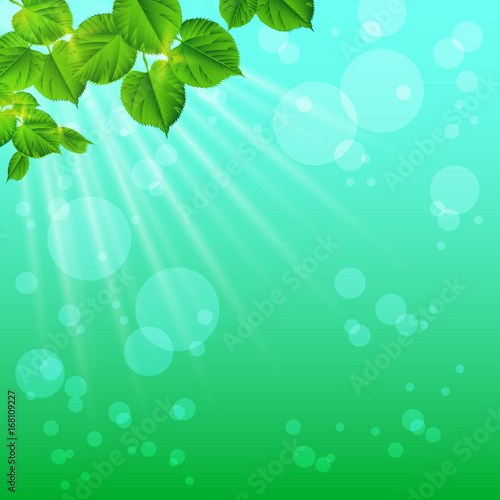 Fotobehang Groene koraal The rays of sunrise glow in the foliage. Nature background. Spring / summer background. Concept-ecology. Beauty of nature.