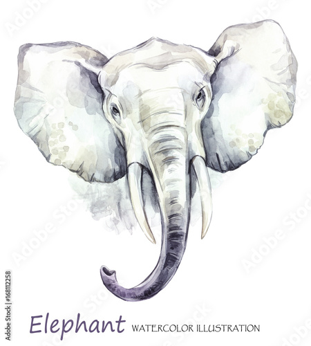 Watercolor elephant on the white background. African animal. Wildlife art illustration. Can be printed on T-shirts, bags, posters, invitations, cards, phone cases, pillows. - 168112258