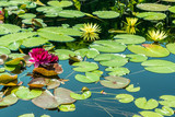Colorful water lilies on still water - 168140887