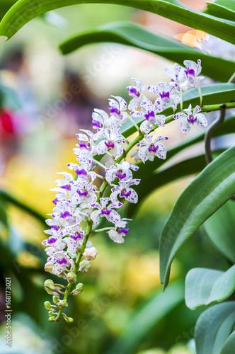 Flower In Viet Nam