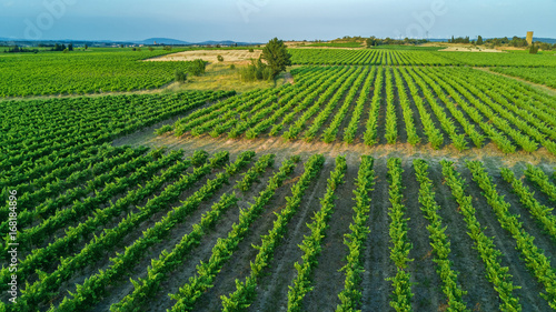 Vineyard Aerial top view of vineyards landscape from above background, South France