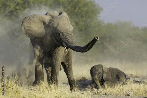 Playfull Elephant Youngsters
