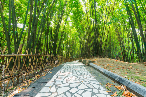 Fotobehang Bamboe A footpath in a bamboo forest in Chendu, China