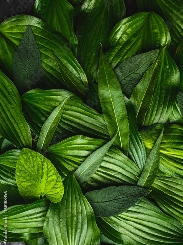 Creative background made green leaves