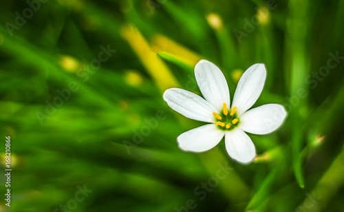 Poster Close up of a white flower with green background